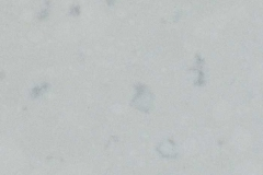 4141-Misty-Carrera